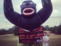 Here's Stephen with Bertie the gorilla who was used to help advertise Bushwacked charity music festival!